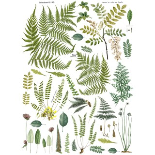 "Decor Transfer ""Frond Botanical"""